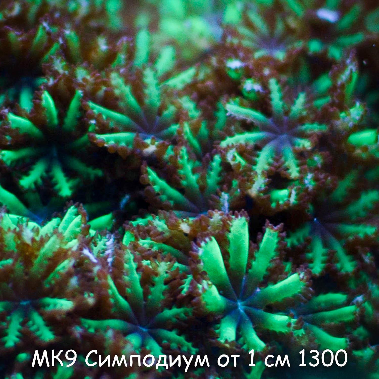 МК9 Симподиум от 1 см 1300