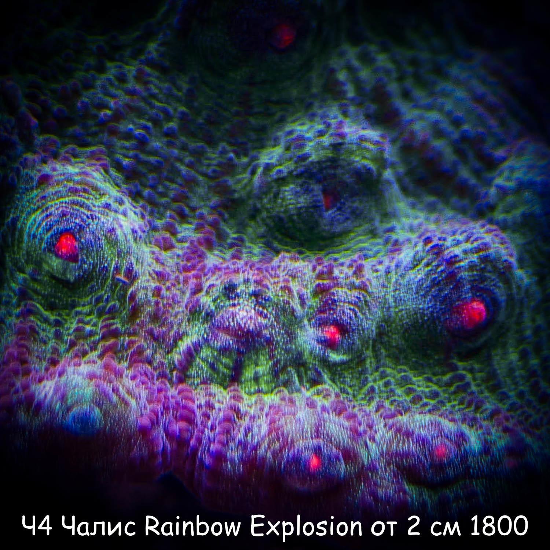 Ч4 Чалис Rainbow Explosion от 2 см 1800