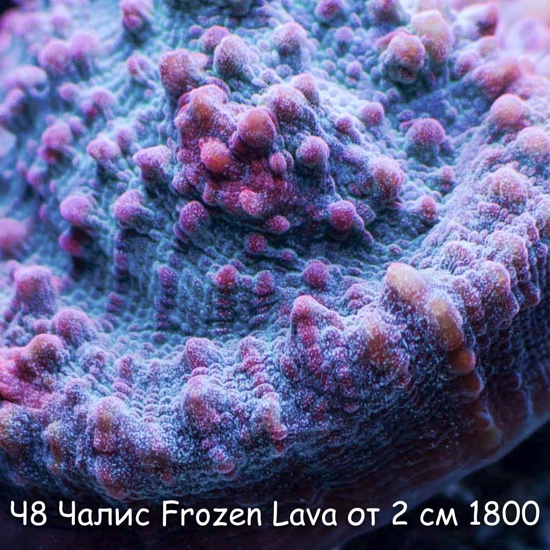 Ч8 Чалис Frozen Lava от 2 см 1800
