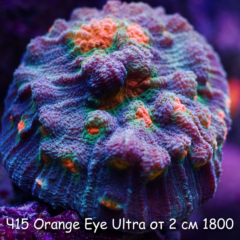 Ч15 Чалис Orange Eye Ultra от 2 см 1800