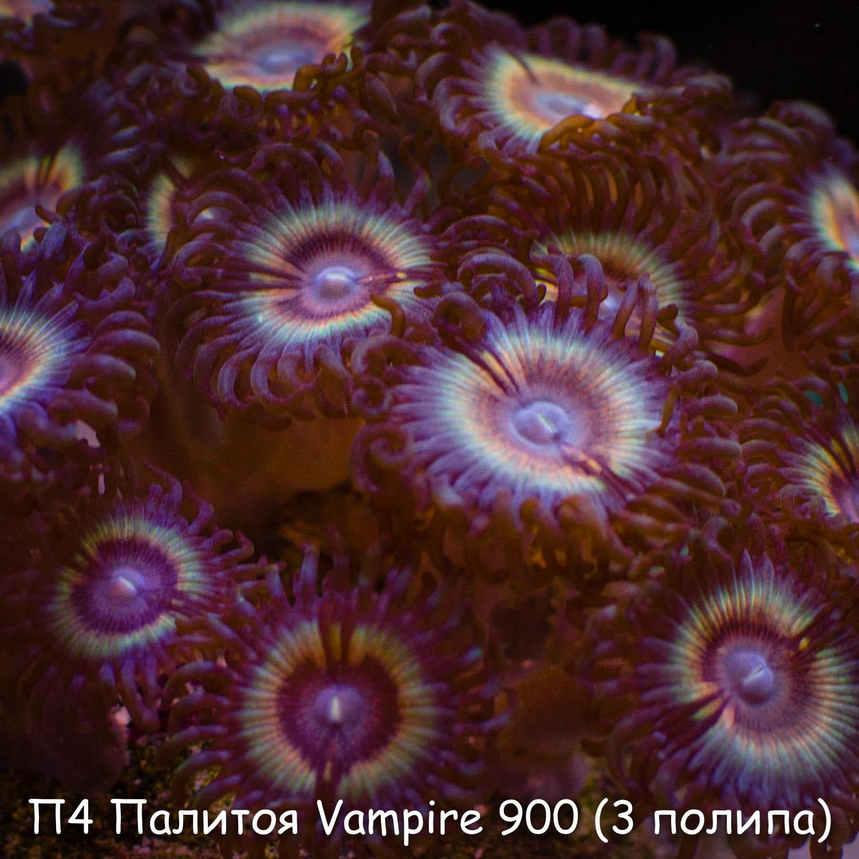П4 Палитоя Vampire 900 (за 3 полипа)