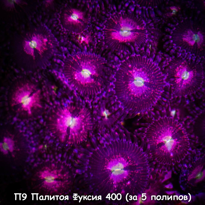 П9 Палитоя Фуксия 400 (за 5 полипов)
