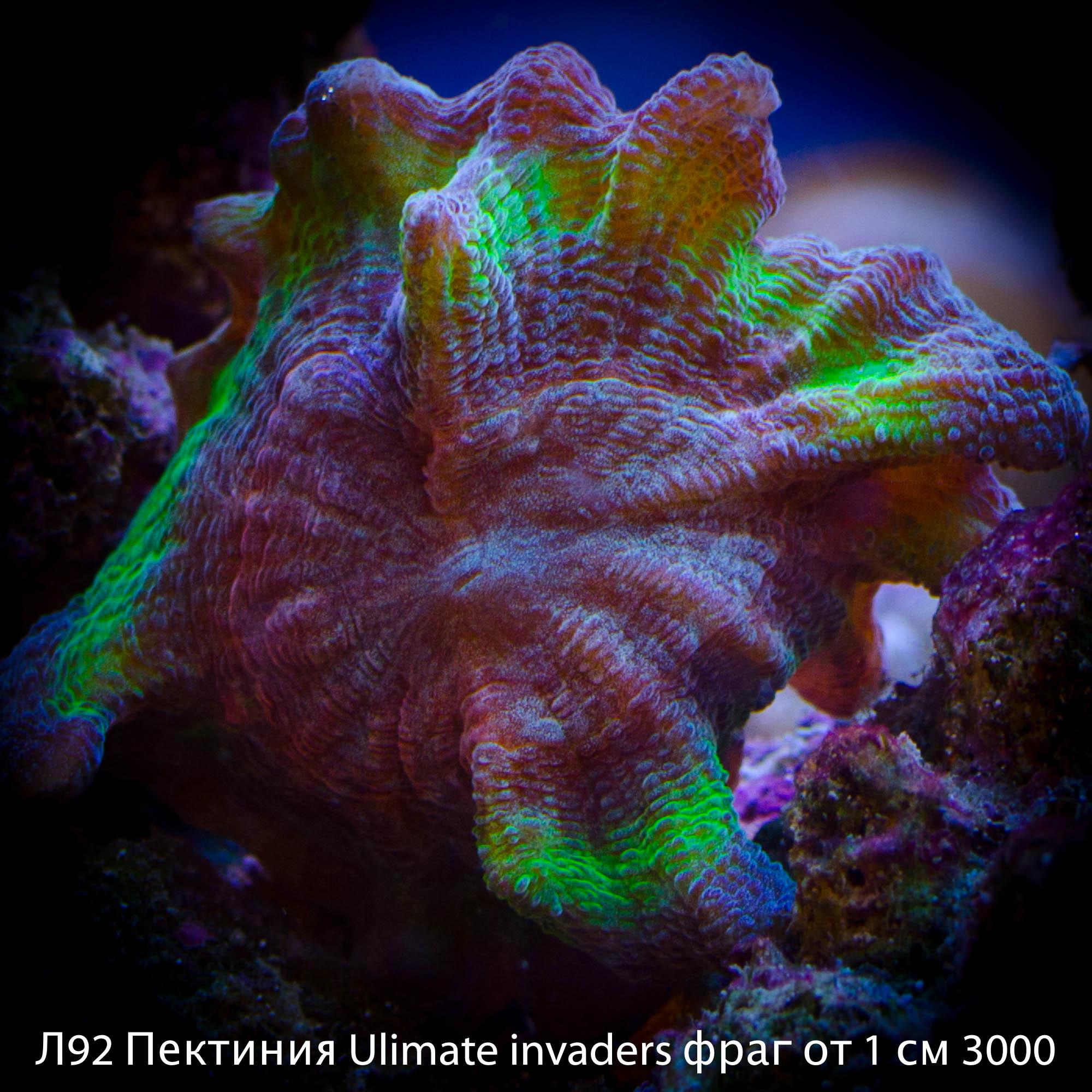 Л92 Пектиния Ulimate invaders фраг от 1 см 3000