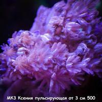 МК3 Ксения пульсирующая от 3 см 500