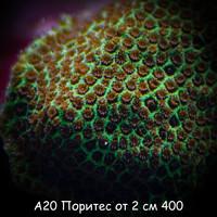 А20 Поритес от 2 см 400