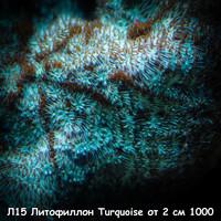 Л15 Литофиллон Turquoise от 2 см 1000