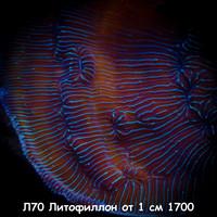 Л70 Литофиллон от 1 см 1700