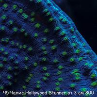 Ч5 Чалис Hollywood Stunner от 3 см 800