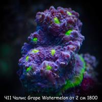 Ч11 Чалис Grape Watermelon от 2 см 1800