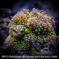 МК15 Рикордея флорида желтая диск 2600