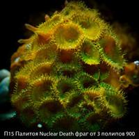 П15 Палитоя Nuclear Death фраг от 3 полипов 900