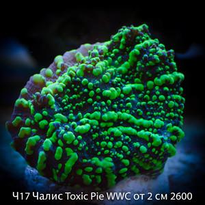 Ч17 Чалис Toxic Pie WWC от 2 см 2600