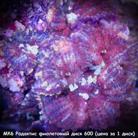 МК6 Родактис фиолетовый диск 600 (1 диск)