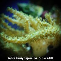 МК8 Синулярия от 5 см 600